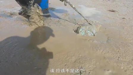 """泥滩赶海发现好多螃蟹,真正的目的是这只""""蟹王"""""""