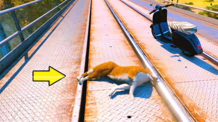 狗狗被无情的火车碾压,我太伤心了!呜呜呜