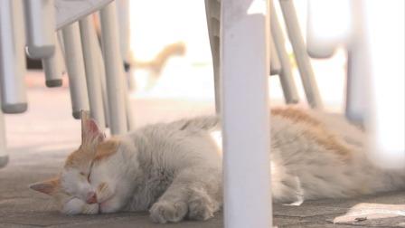 夏天的马耳他,猫咪只在傍晚和清晨活动 捉喵记·岩合光昭的猫步走世界 20200626 快剪  0323093503