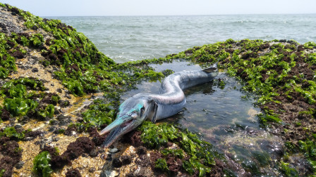 小渔翁赶海又有大收获,捡到一条很奇怪的大家伙,说要拿回去喂猫