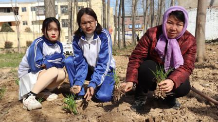 童年短剧:傻妞姐妹去地里,帮助妈妈一起栽黄花菜,姐妹俩真懂事