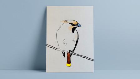 画鸟窦老师教画画