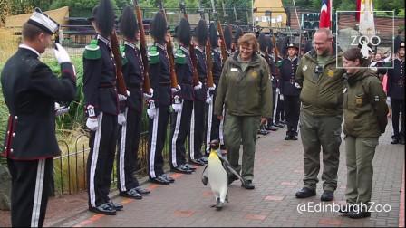 这事也就国外干的出来,军队授予企鹅准将军衔,视察部队!
