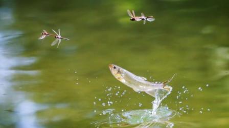 一小时能够吃840只蚊子的生物,竟被人们吃的快灭绝了,不可思议