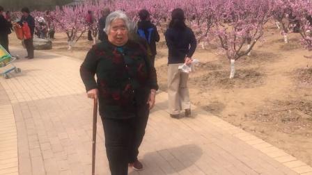 老妈阳春三月赏桃花