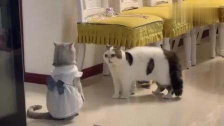 很想知道这猫嘴里,叽里咕噜的说些什么