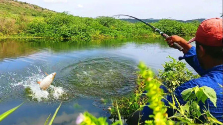 大哥河边野钓,鱼儿纷纷上钩,看看他钓到了啥鱼?