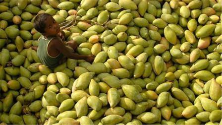 越南:中国帮助巴基斯坦解决了水果滞销,我们水果咋办呢?