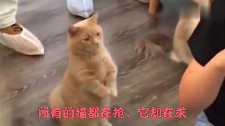 萌宠猫咪:世界上总有那么一些猫咪,做着与其它猫咪完全不同的事情!