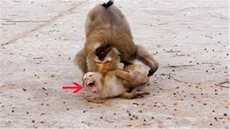 猴子妈妈逼迫婴儿走路不顾婴儿的死活究竟是怎么惹怒了母亲