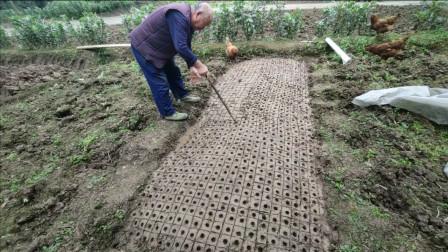 四川农村玉米 的种植,原来这么麻烦,没有你想象的简单