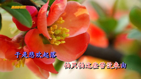 杨小壮,鹏鹏《 口是心非》落寞中带着无奈,你听出来了吗?