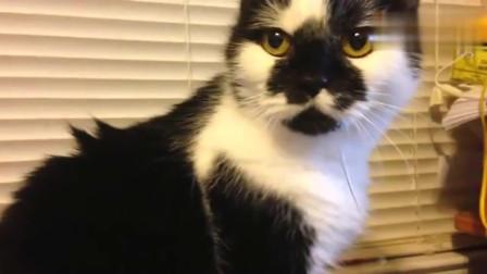 萌宠猫咪:猫咪你的口水流出来了,你没发现吗