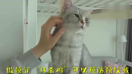 """萌宠猫咪:猫生也就如此了,主人的""""马杀鸡""""让我达到了喵生巅峰"""