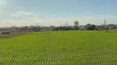来到日本的农村,仿佛回到了多年前的童年,天是蓝的,水是清的空气是甜的