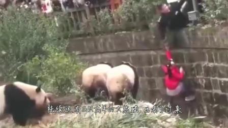 熊孩子掉入动物园,突然身后走来一个大猩猩,下一幕太可怕了