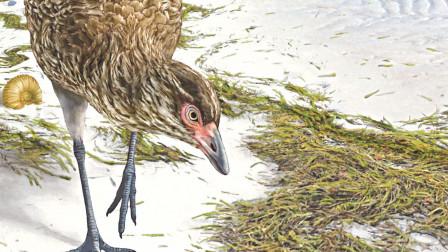 科学家发现最古老鸟类化石,与恐龙是一个时代,或将改写人类认知