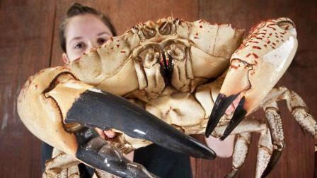 比人个头还大的螃蟹!体重78斤蟹黄都有2斤,身价高达30万!