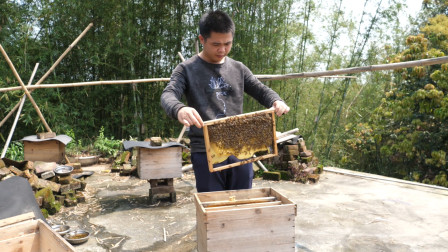 蜜蜂为什么会咬自己的蜂王?养蜂人说出这几种原因,你的蜜蜂有吗