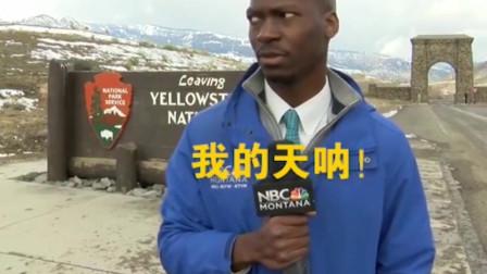 美国记者在黄石公园,采访时偶遇野牛,紧张的样子让他一夜爆红