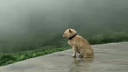 这是一只有故事的狗子,邻村的小黑说来这里与我约会的,下点雨就不来了吗?