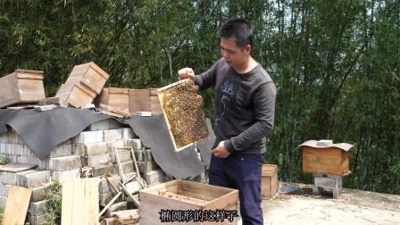 好的蜂王是怎么样的?养蜂人带你一看究竟,这种蜂王繁殖要快一倍
