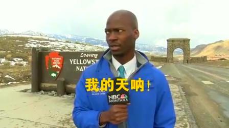 美国记者在黄石公园采访时遇野牛,好紧张