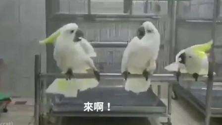 中间的鹦鹉很懵啊