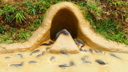 大哥设个奇特的陷阱抓鱼,一群鱼儿纷纷赶着往里钻,真奇了