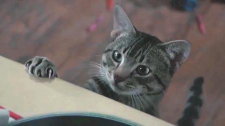 女孩阳寿已尽却没,只因收养的流浪猫,每晚都和神决斗
