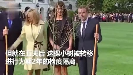 厉害了~马克龙送给特朗普的友谊之树被养死