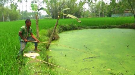 农村小伙钓鱼,田边蓄水池抛几竿,看看他钓了多少?