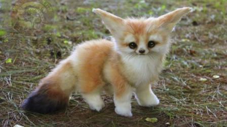 5种世界上最萌的小动物,养一只?