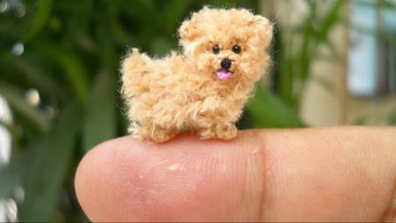 5种世界上最小的狗狗,你爱了吗?