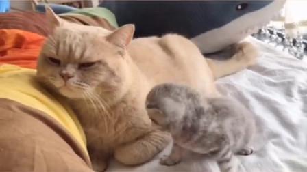 小奶猫想出去玩,猫爸一直在那哄它,可是怎么哄都哄不好