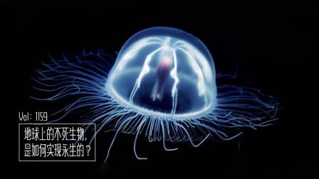 地球上的不死生物,是如何实现永生的?