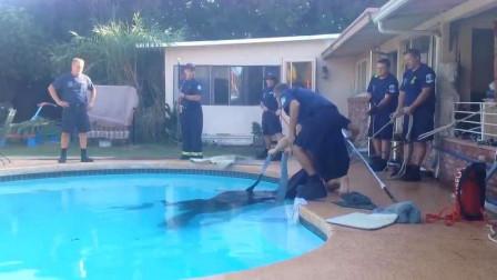 男子在游泳池发现一团黑影,凑近仔细一看,立马叫来救援人员