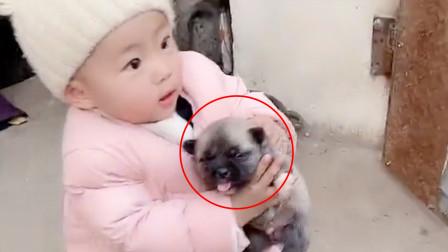 宝宝独自一人钻进狗窝,出来时还抓着小狗!网友:太危险了!