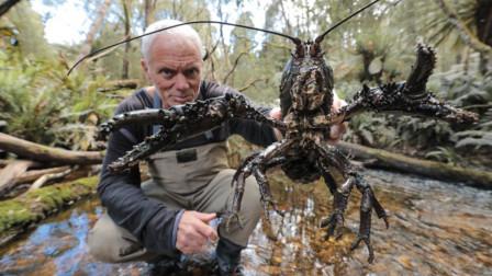 老外野外探险,捕获巨型小龙虾,这下有口福了!