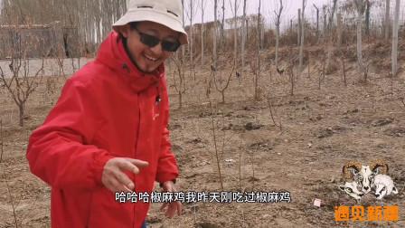 新疆小伙创业1年未回家,农家小院只有8亩地!这是怎样的生活体验