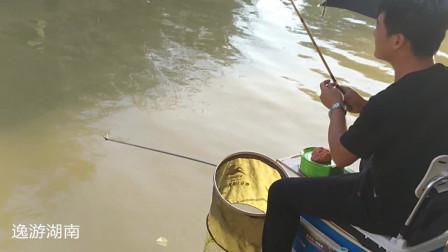 钓鱼小哥河沟枯草下找到好钓位,热得难受也挡不住挥杆上鱼的乐趣