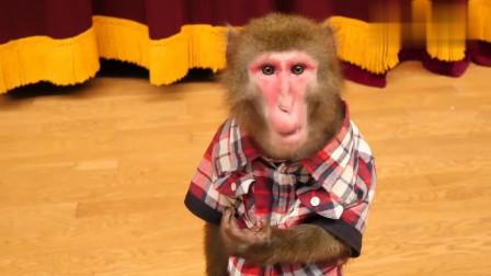 太坏了,主人拿跳跳糖让泰国猴子试吃,猴子的反应太逗了