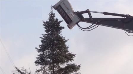 """这是世界上最残忍的砍伐树木,一棵大树被这个大机械直接""""吃""""了"""