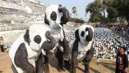 """印度公园出现大量""""熊猫"""",游客纷纷合影留念,走近一看笑喷了!"""