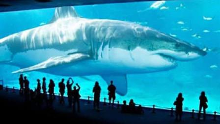 游客站在透明玻璃外看鲸鲨,剑鱼突然飞速游了过来,下一秒意外发生!