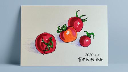 西红柿窦老师教画画