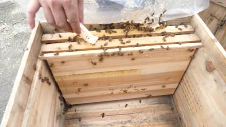 养蜂小伙造双王群,这操作也太奇葩了,看完我笑了