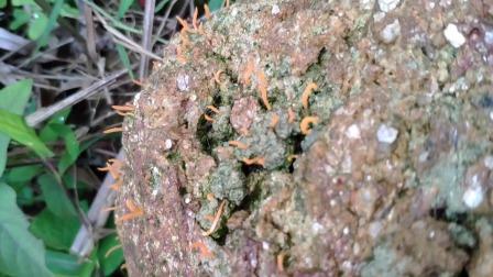 户外山上拍摄的野生植物有你们认识的吗