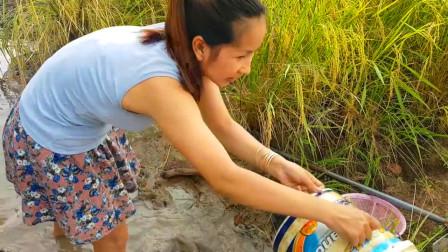 稻田水坑抽干,农村妹子成功抓到了鱼儿和螃蟹,过程太爽了