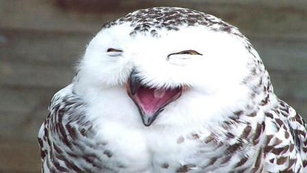 """""""不怕猫头鹰叫,就怕猫头鹰笑"""",这句话其实有科学依据"""